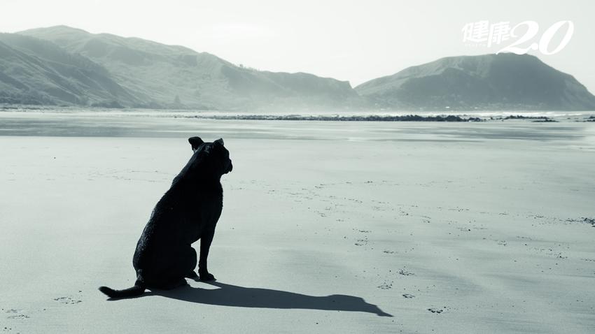 邱吉爾心中住著一隻名為「憂鬱」的黑狗,你也是嗎?