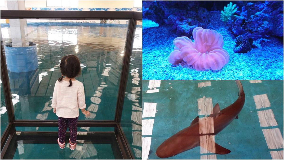 透明觀景台看「鯊魚池」!宜蘭版海生館免門票 還有鯊魚餵食體驗