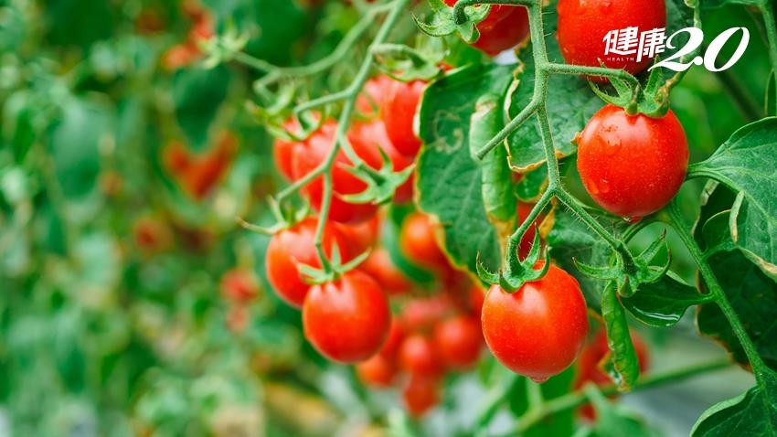 甜味及苦味的蔬菜差別在哪?苦澀的對身體有危害?
