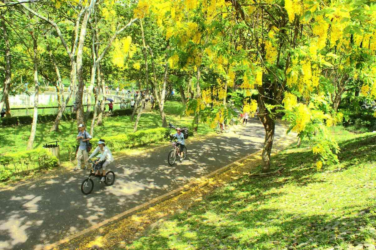 黃金雨好美呀!台南阿勃勒盛開了,這12處賞花拍花快筆記