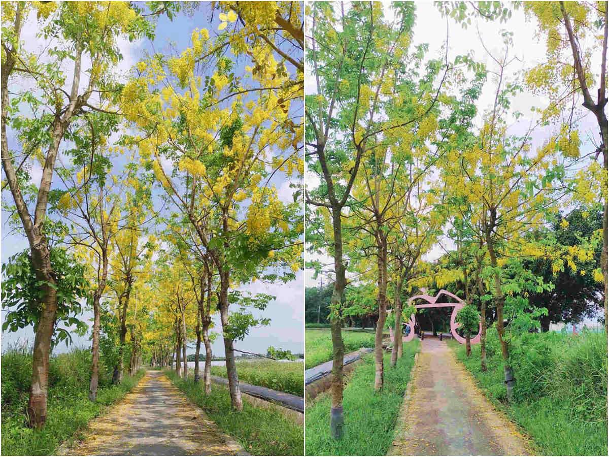 賞花新祕境!「蓮花」「阿勃勒」一次全收,就在台南「蓮鄉自行車道」
