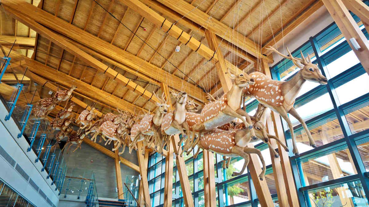 來這挖化石、看梅花鹿飛!台南化石園區「買百送千」遛小孩省很大
