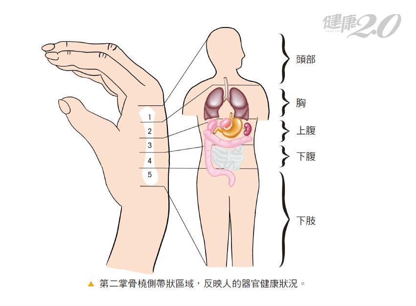 小拇指蒼白要留意心血管疾病!手掌顏色、溫度都暗藏疾病信號