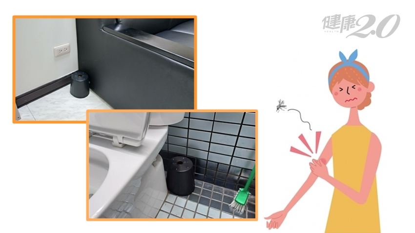 自製「殺蚊桶」放家中3個地方 遠離登革熱、屈公病