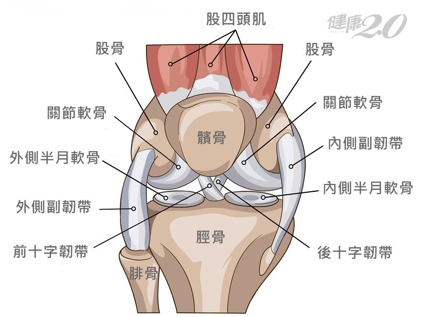 膝蓋退化有9大部位 骨科醫坦言:不一定得換人工關節