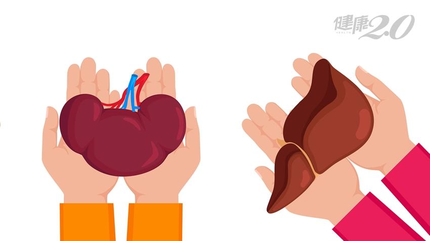 我適合捐肝腎給親人嗎?醫師解析「活體器官捐贈」