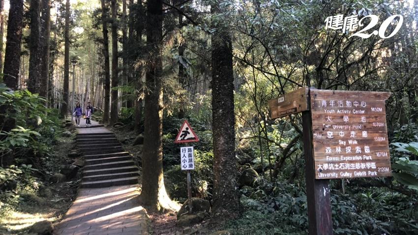 國人瘋溪頭森林浴!台大證實:走溪頭森林步道可提升免疫力