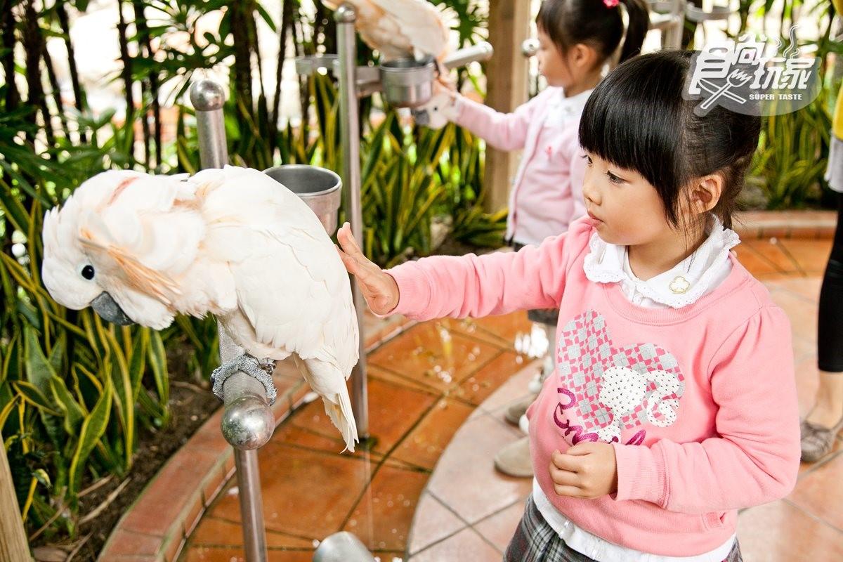 寒假遛小孩首選!全台12個動物系休閒農場,餵鹿、看鸚鵡耍寶還能玩滑草