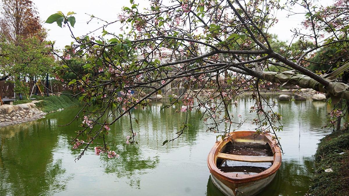 【全台賞櫻12祕境】中南部、宜蘭人賞花囉!6美景免費拍:垂櫻河畔、牡丹櫻山坡