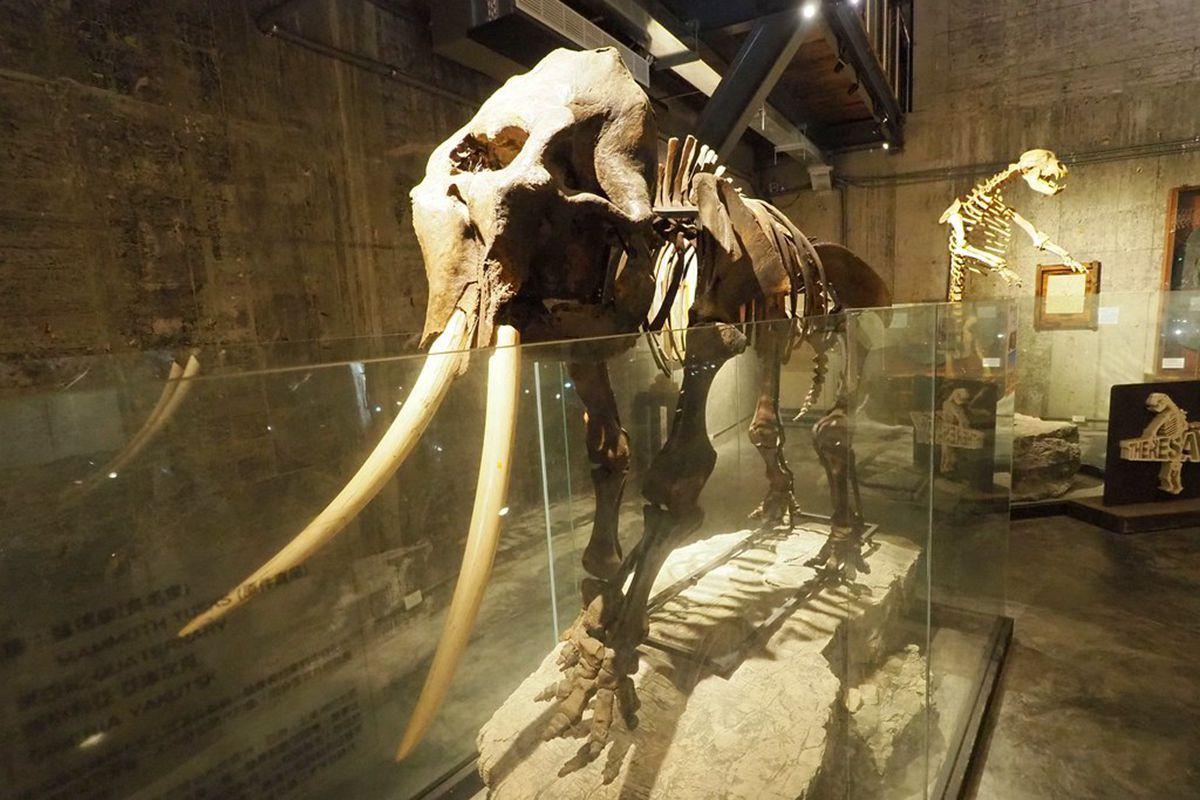 【全台遛小孩8路線】宜蘭2天1夜好好玩,計程車博物館最夯新點,還可餵小鹿、看恐龍化石