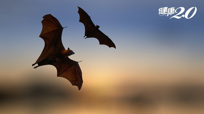 讓人恐慌的新病毒,為何大都從蝙蝠傳出來?
