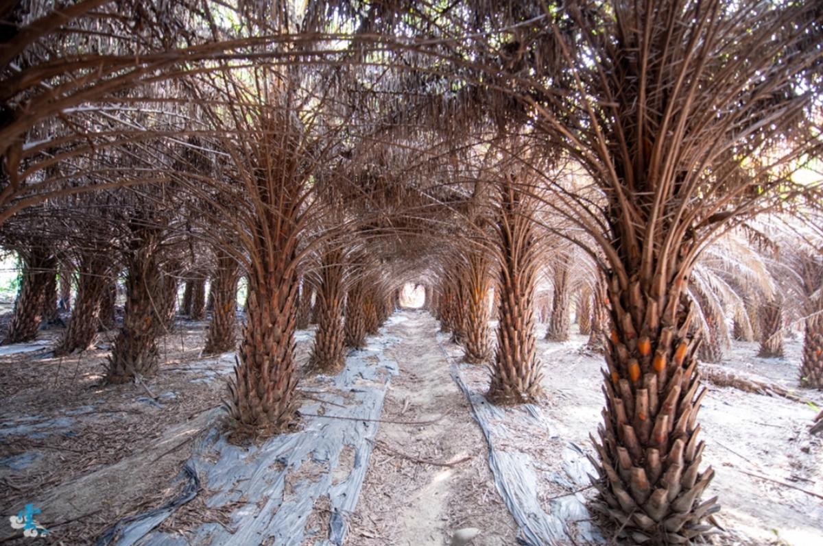【全台28大綠色祕境】中台灣「異國系」景點6選:迷你富士山、巧克力色森林、千尋隧道
