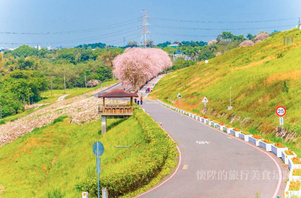 南洋櫻「粉紅花毯」好美啊!門票3折+停車費停收,到台南烏山頭水庫拜訪春天