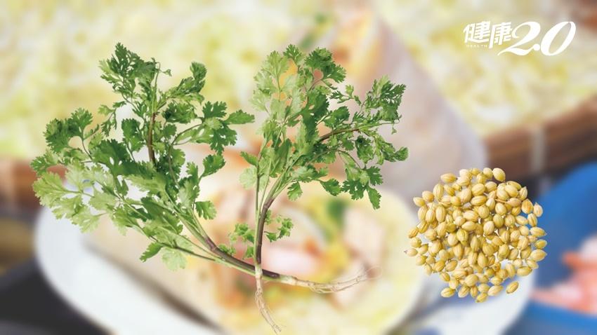 潤餅最佳配角香菜!根、葉、籽都能活用 特殊氣韻惹人愛