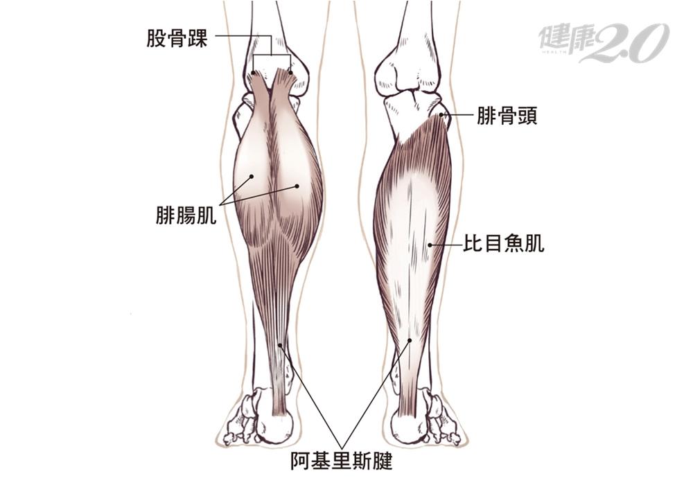 腳底、足跟又緊又痛…靠雙手緩解!痠痛元凶在小腿肌
