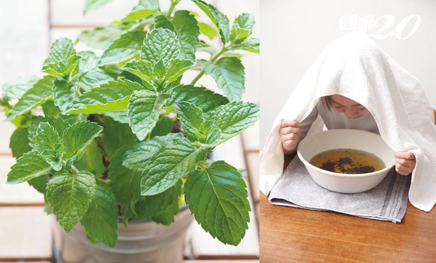 超實用香草植物!薄荷「外服內用」3招 提神醒腦、緩解腸胃不適