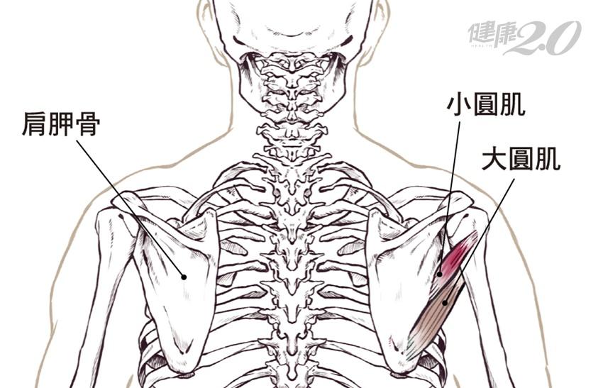 背後好癢抓不到…手臂舉不起來?4步驟舒緩大小圓肌