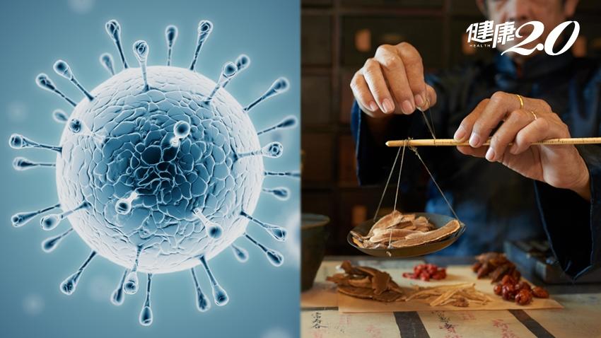 中藥也能對抗新冠肺炎?中西醫師分析2大選藥關鍵