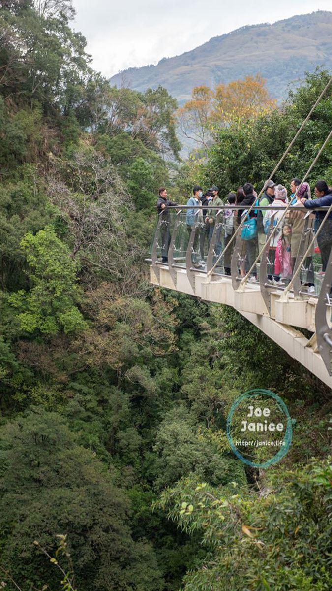 桃園芬多精一日遊4打卡點:15層樓高水管橋、透明天空步道、千年神木保護區
