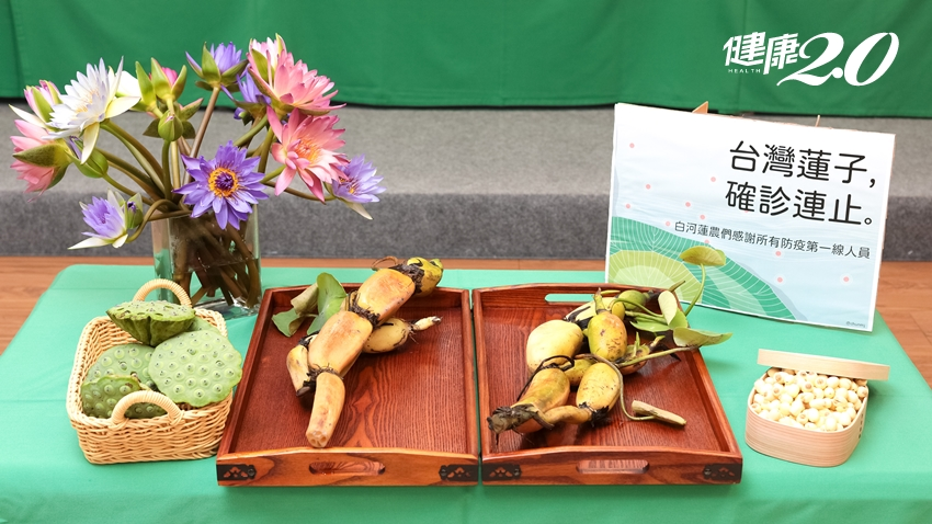 蓮花整株都是寶!蓮子去除夏天煩躁 蓮藕助排便、降血糖