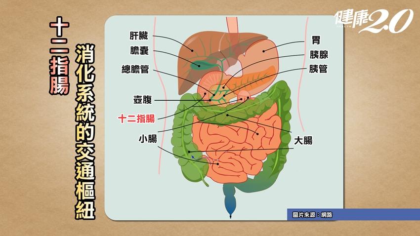 女星蕭淑慎「人魚線疼痛」竟是十二指腸癌!腫瘤長達8.5公分