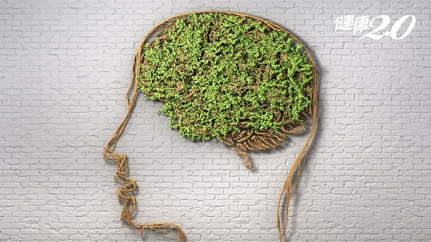 營養不足小心失智症!3種營養素提高大腦認知功能、辛香料也能防失智