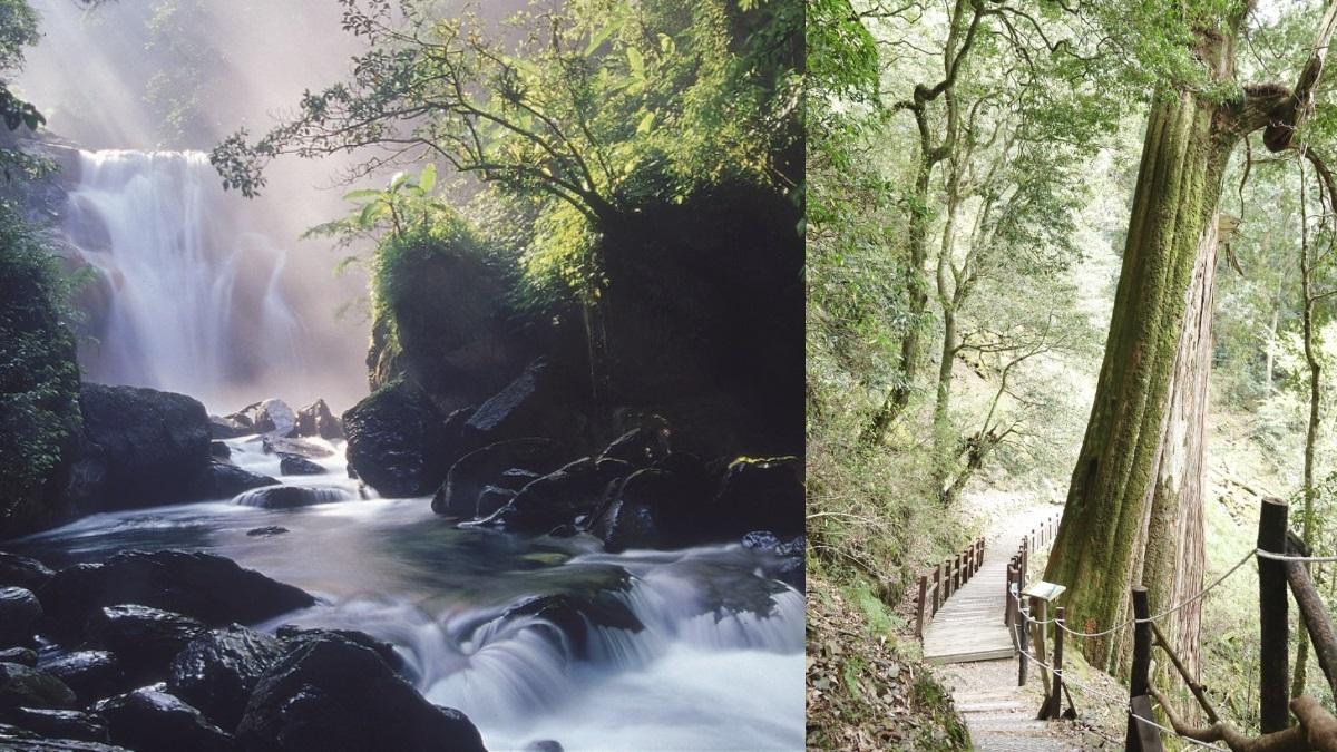 快到「森林遊樂園」避暑!內洞、八仙山等11條森呼吸行程499元起,「一人成行」天天出發