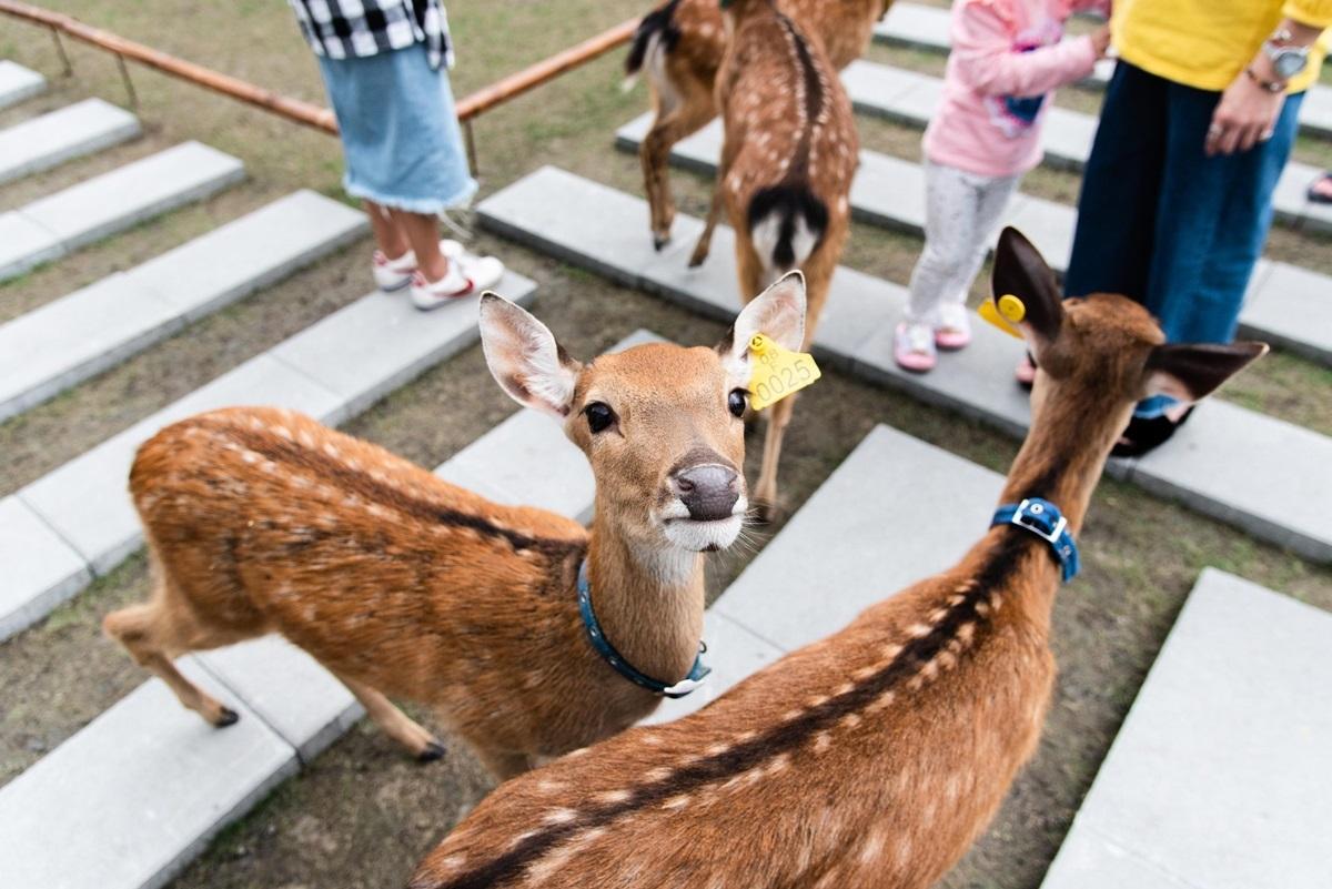 望出去就是綠油油一片!宜蘭「水岸楓林」峇里島度假感爆棚,加碼「兩天一夜行程」看海、餵小鹿