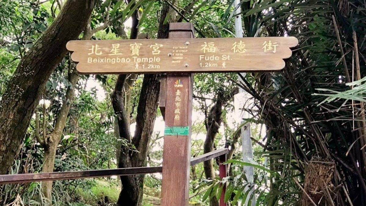 台北打卡祕境!超好走親山步道遠眺101,必拍偽出國加州風椰子林