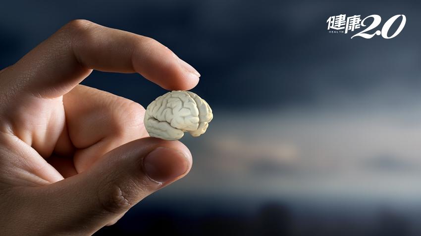 50歲後加速大腦萎縮!醫師曝認知功能障礙恐惡化成失智症 2招超簡單逆轉大腦萎縮
