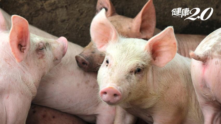 吃台灣豬就對了!農委會公告「瘦肉精」國內禁用販售,最高罰250萬
