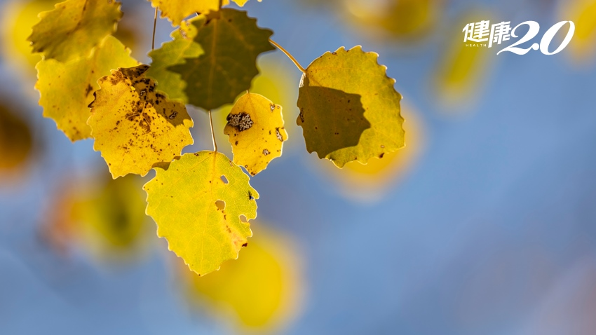 入秋之後小心這些疾病來報到!名醫傳授「養生」7招:吃大蒜、顧鼻子、戒西瓜…