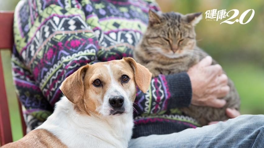 養寵物的人更健康!增加免疫力、降低高齡者高血壓、心血管疾病風險低