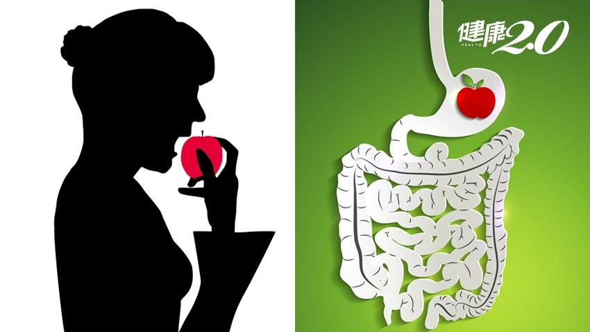 大腸長度比身高還高、小腸長達7公尺!食物消化吸收需要多少時間?答案出乎你意料