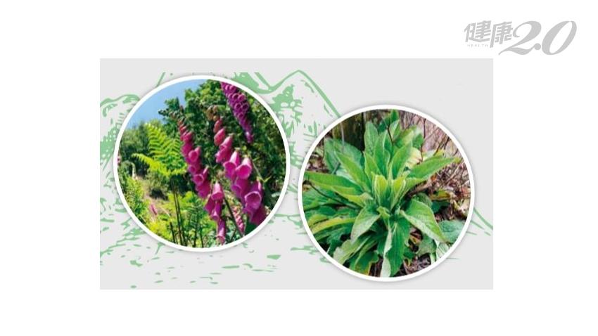 連假出遊、登山別拈花惹草!急診科醫師曝「3大有毒植物」 這種長得像百合花