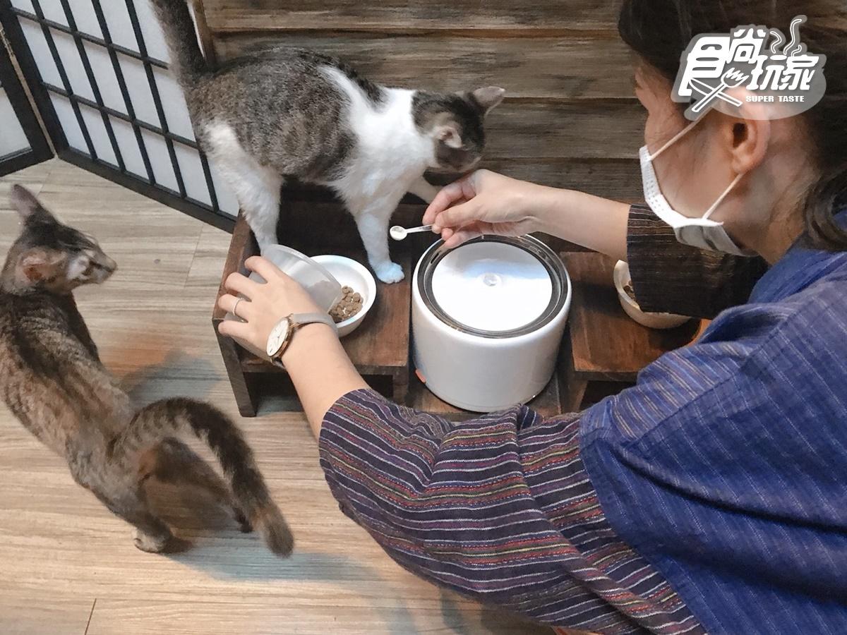 【新開店】貓奴快私藏!台版小京都「弄宅 」獨家大人布丁、金澤手沖咖啡,還有萌喵等門