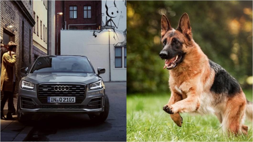 (圖片來源/ Audi、Shutterstock) 狗狗坐車緊張怎麼辦? 降低焦慮及改善暈車有方法