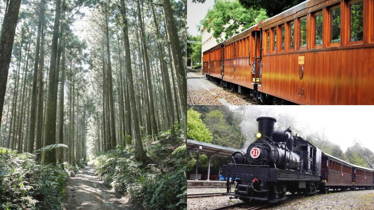 搭全台唯一「檜木列車」賞楓了!森林遊樂區秋冬遊程出爐,還有「星空漫遊」超浪漫