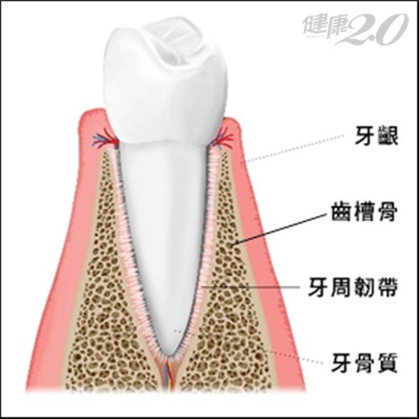 拔牙前注意!先了解「齒槽脊保存術」,減少骨頭吸收、打好假牙地基