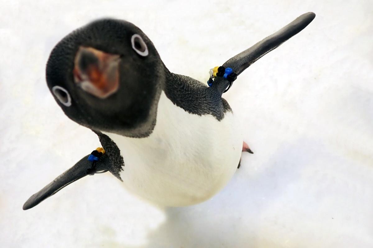 餵梅花鹿輸了!全台首次「企鵝近距離餵食」體驗,每日限定名額這時開賣