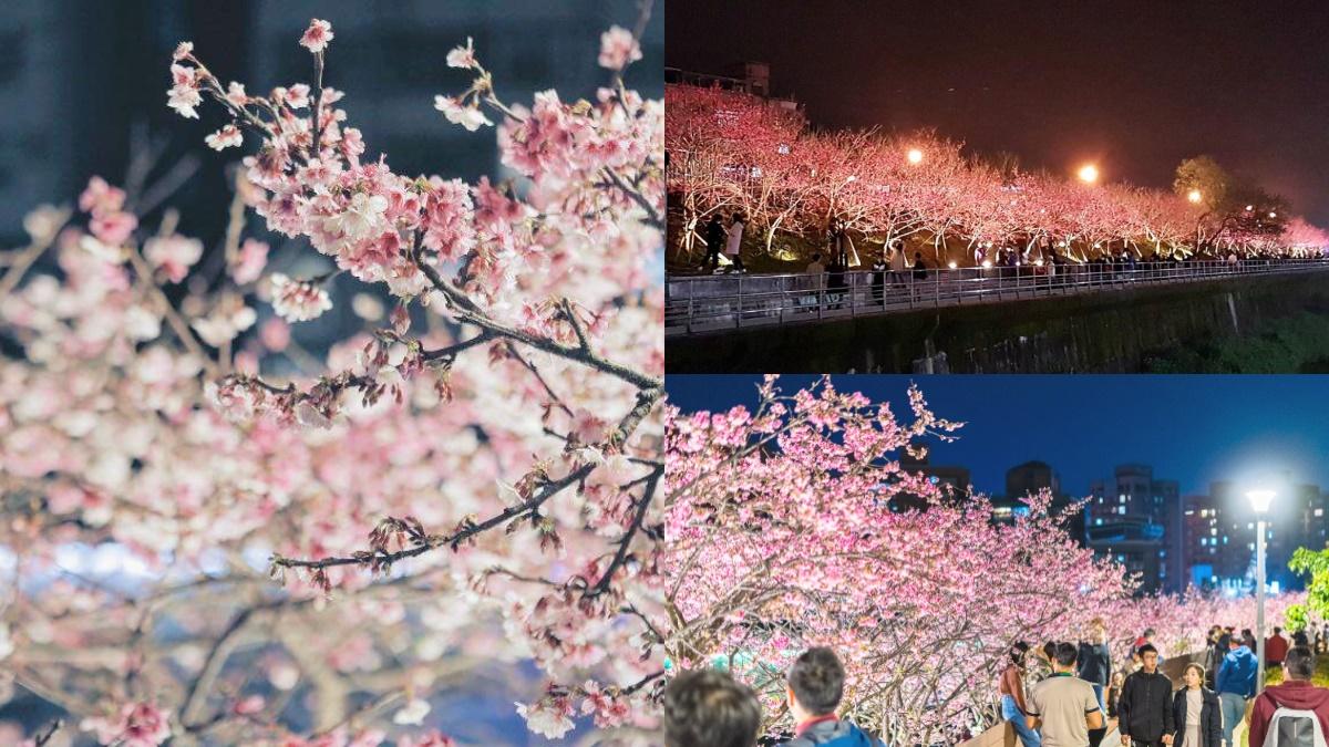 每年內湖必追賞櫻點!「2021樂活夜櫻季」這時登場,3公里櫻花大道準備狂拍