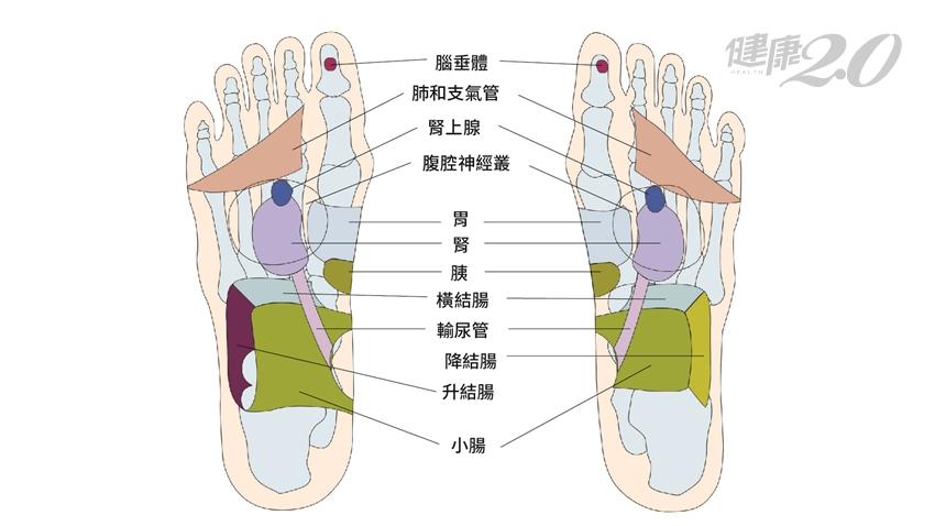 糖尿病特效按摩!刺激腳底12個反射區 恢復胰島功能