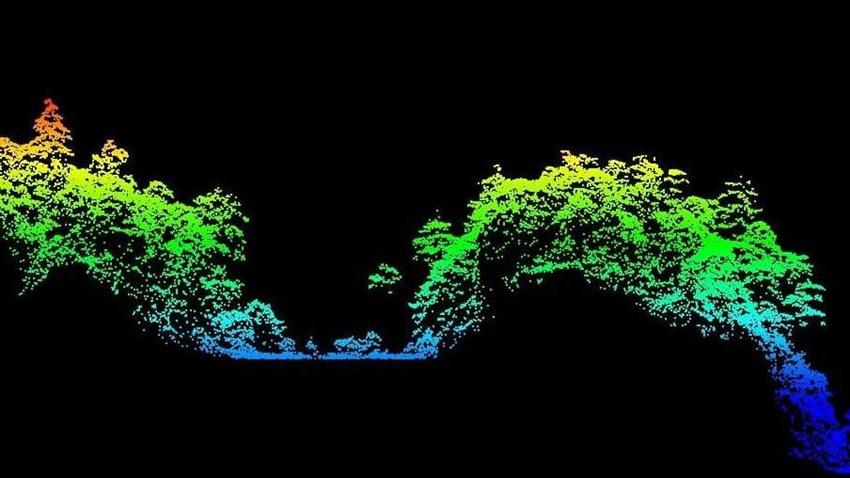 春節連假沒事做?上網協尋「台灣最高的樹」 有望成為巨木命名人