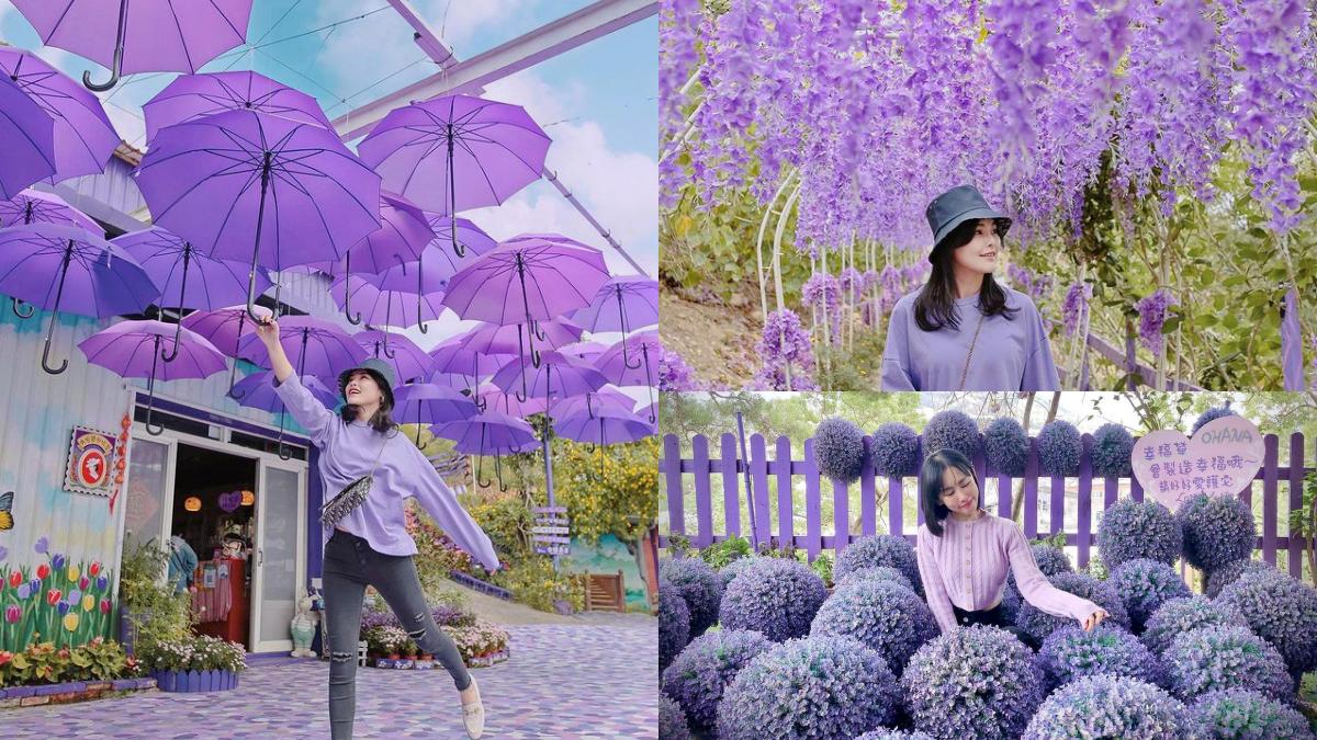 漫步紫色仙境!噢哈娜咖啡屋「紫藤花步道」太夢幻,紫色花傘、波波草超好拍