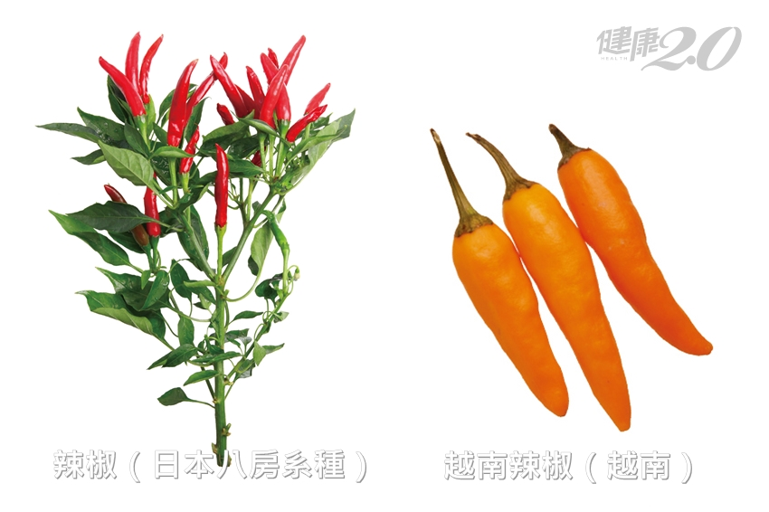 吃辣促進脂肪分解!2招保存辣椒不走味 8種世界知名辣椒大公開