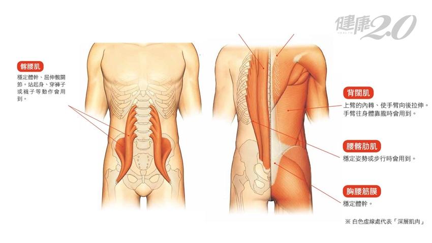腰痛起來全身也好痛!天天做「舒展腰部操」 鬆開筋膜沾黏、腰痛不上身