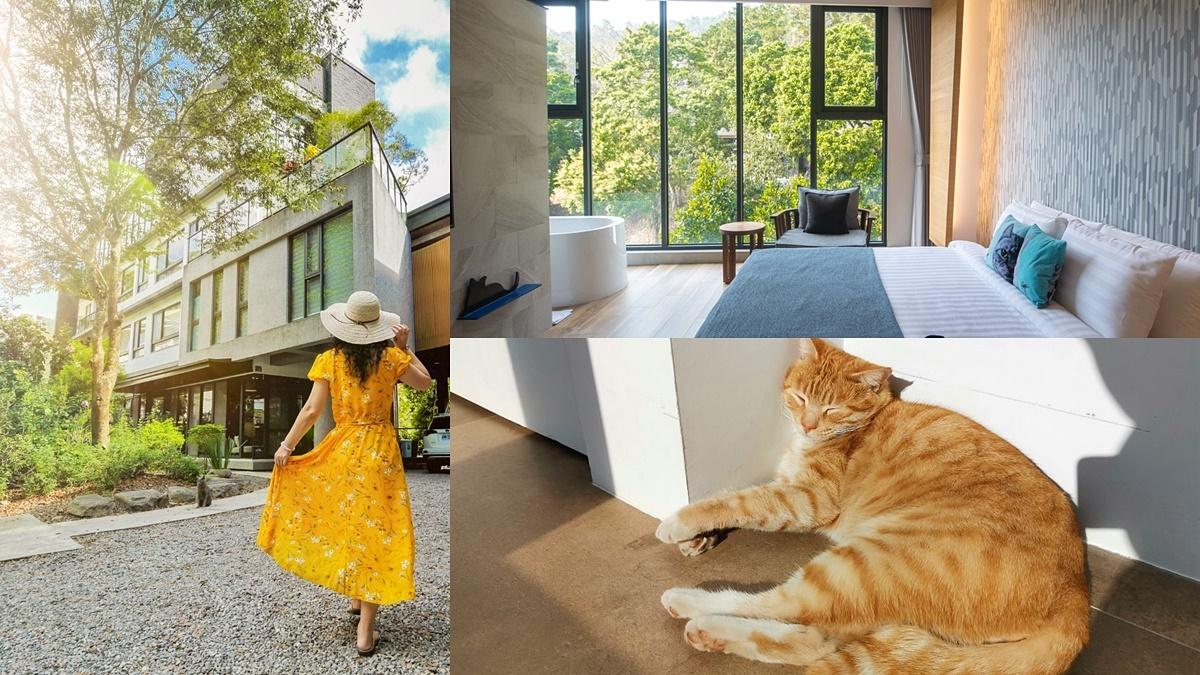 一秒住進「貓村」!台灣10大必住民宿第一名,日式風格、落地窗浴缸可邊聞貓邊打卡