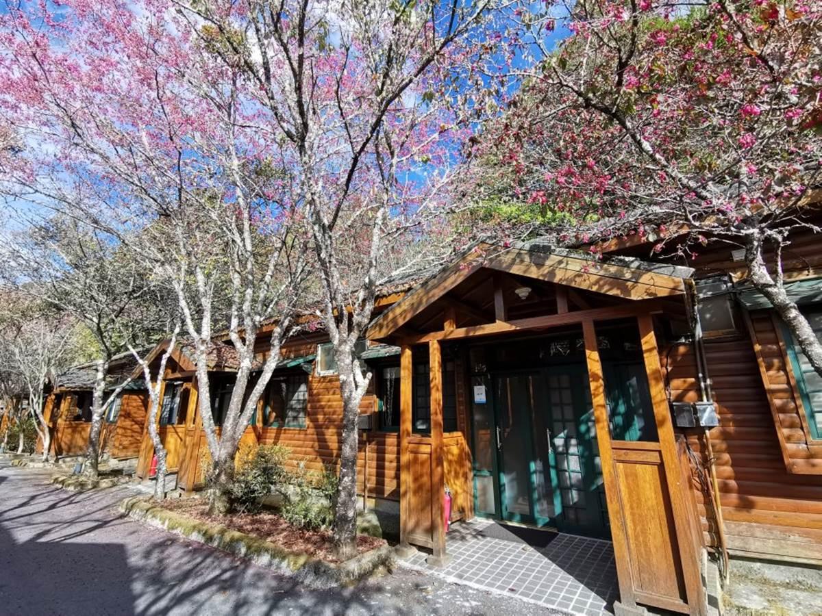 大雪山全攻略!櫻花、神木、天池美景一次包,還有機會偶遇山羌、藍腹鷴