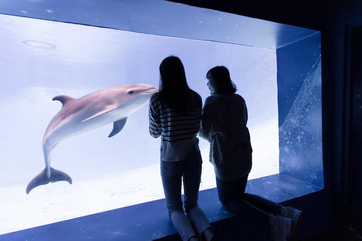 台中海生館明年開幕!10公尺深巨型水槽與4大展區必看,遠雄海洋公園祭住宿+門票37折