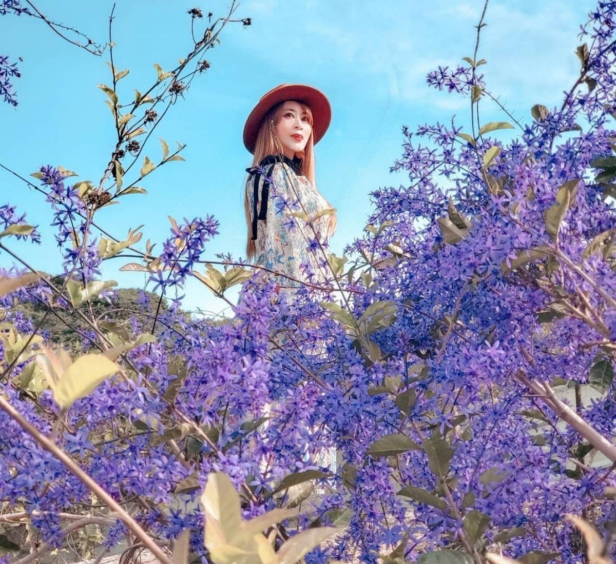 紫色花海浪漫來襲!南投錫葉藤花季登場,50公尺紫色隧道、絕美花瀑美若仙境